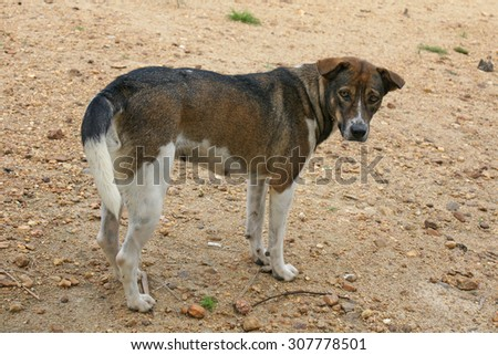 Lonely Thailand dog on the beach or play ground - stock photo