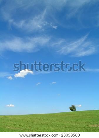 Lonely tree. - stock photo