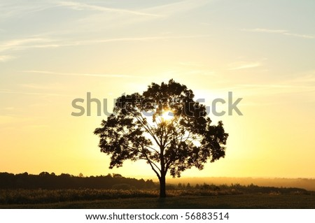 Lonely tree against a blue sky at sunrise. - stock photo
