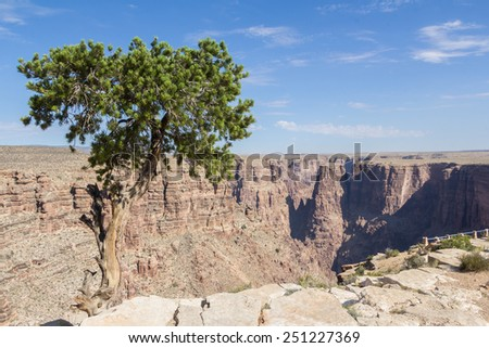 Lonely tree against blue sky at the edge of a canyon in Arizona, - stock photo