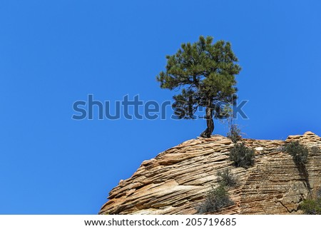 lonely tree against blue sky in the mountains at Zion national park in Utah, USA  - stock photo