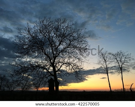 Lonely tree and tombstone. Sunset in the cemetery - stock photo