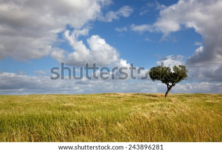 lonely tree at a farm in alentejo, the south of Portugal, typical landscape - stock photo