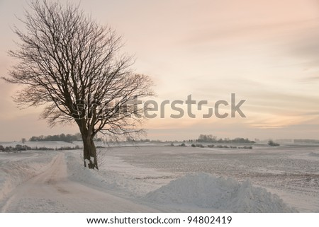 Lonely tree at a small road in the sunset at wintertime