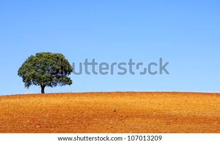 Lonely tree at alentejo region, Portugal - stock photo