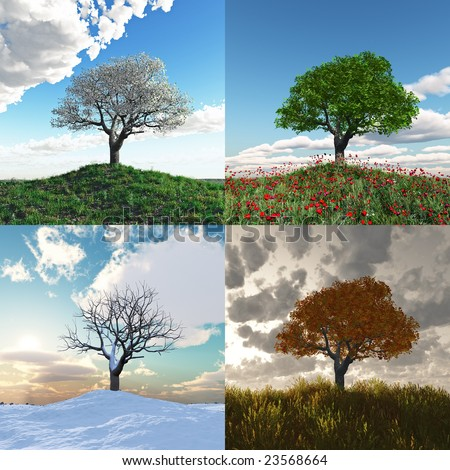 lonely tree at four seasons time lapse - stock photo