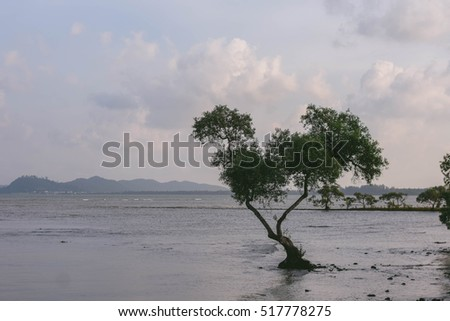 Lonely tree at the seaside