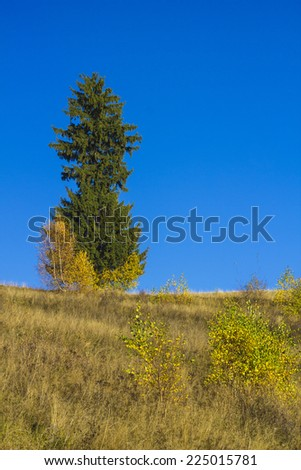 Lonely tree autumn landscape