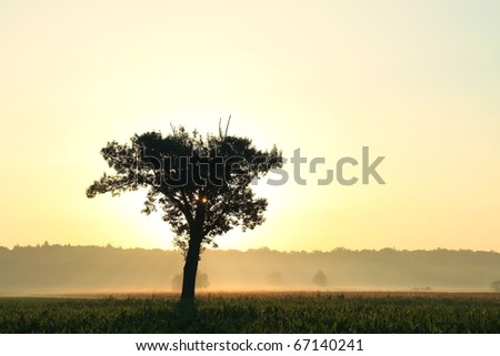 Lonely tree backlit by the rising sun. - stock photo