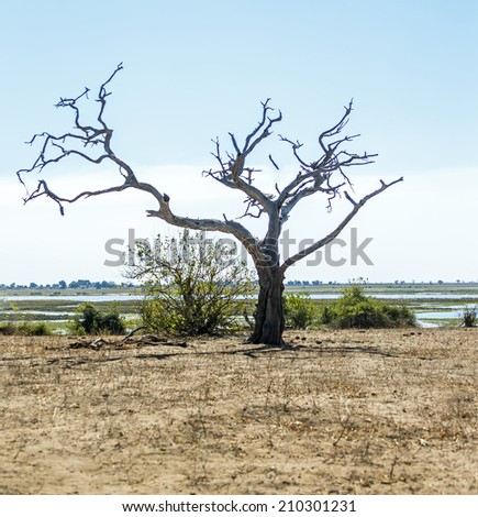 Lonely tree - Botswana, South-West Africa - stock photo
