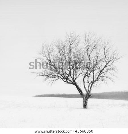 lonely tree during winter season on white background in black and white style