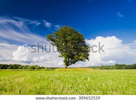 Lonely Tree Field Landscape  - stock photo