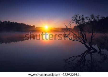 Lonely tree growing in a pond at sunrise. Dramatic silhouette - stock photo
