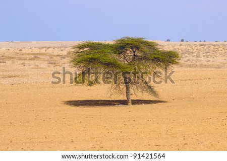 Lonely tree in a desert