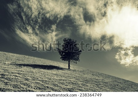 lonely tree in a field. - stock photo