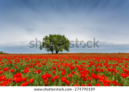 lonely tree in a field - stock photo
