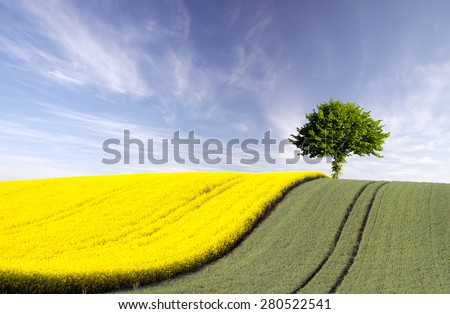 lonely tree in a field of grain and oilseed on background blue sky  - stock photo
