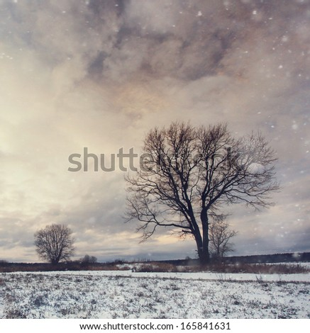 lonely tree in a field of snow in December - stock photo