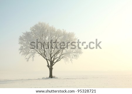 Lonely tree in a field on a sunny cloudless morning. - stock photo
