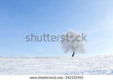 Lonely tree in a field on a sunny cloudless morning. Alone frozen tree in winter snowy field. Frosty winter day - snowy branch. - stock photo