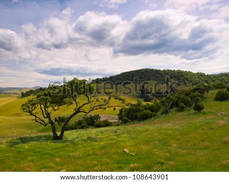 Lonely tree in a hilly rural landscape - stock photo