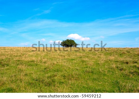 Lonely tree in a meadow on blue sky. - stock photo