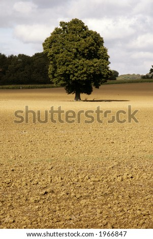 Lonely tree in a newly ploughed field - stock photo