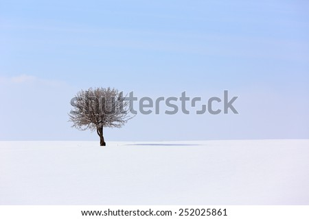 Lonely tree in a soft , tranquil and snowy environment in winter time. - stock photo