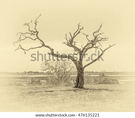 Lonely tree in Chobe National Park - Botswana, South-West Africa (stylized retro)