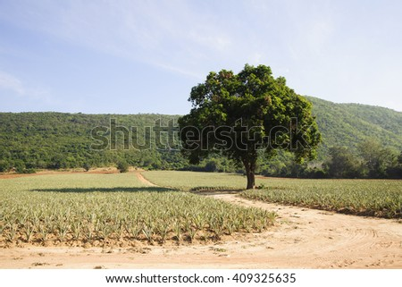 lonely tree in field