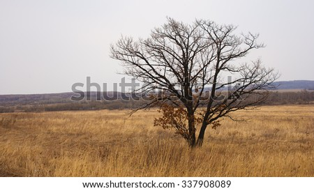 Lonely tree in field, autumn, and bare tree, the tree without leaves, yellow, field, panorama of nature, the horizon. - stock photo