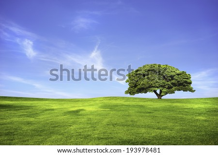 Lonely tree in green grass field and blue sky - stock photo