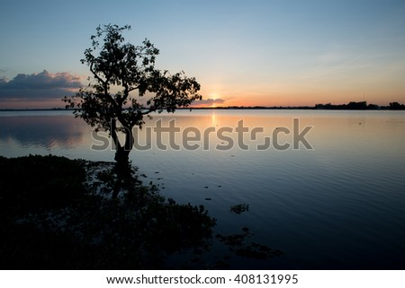 Lonely tree in lake at Sunset - stock photo