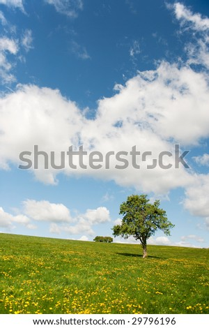 Lonely tree in landscape with yellow dandelions