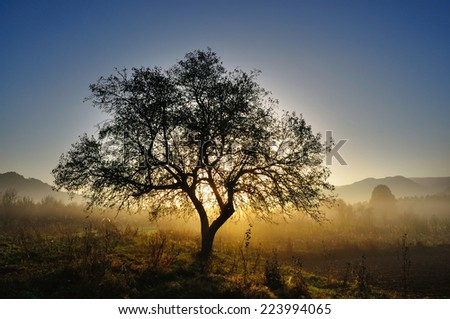 Lonely tree in morning mist  - stock photo