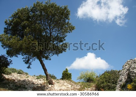 Lonely tree in mountains, provence, france