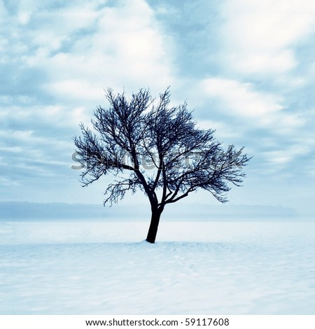 Lonely tree in snow - stock photo