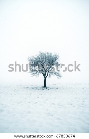 Lonely tree in snow - stock photo