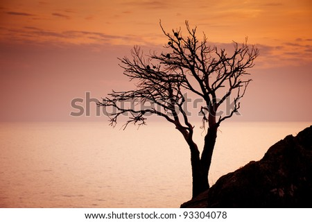 Lonely tree in sunset