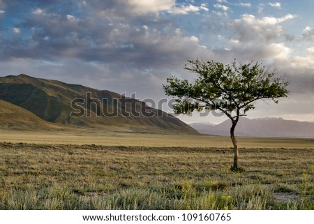 Lonely tree in the desert at sunset - stock photo