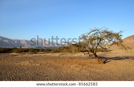 Lonely tree in the desert with mountains and clear blue sky in the background