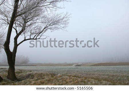 Lonely tree in the field on a very foggy day - stock photo