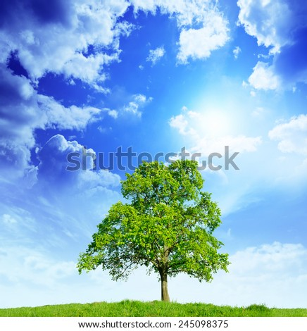 lonely tree in the meadow against the blue sky - stock photo