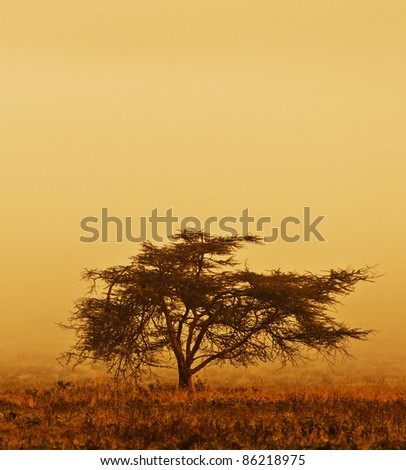 Lonely tree in the mist, nature autumn season, african landscape in the morning, sepia toned - stock photo