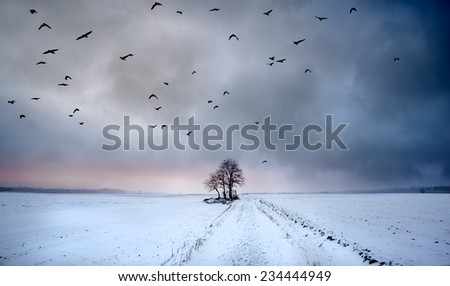 Lonely tree in the snowy field with birds - stock photo