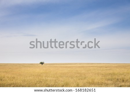 Lonely tree in the vast plains of the Serengeti, Tanzania, Southeast Africa - stock photo