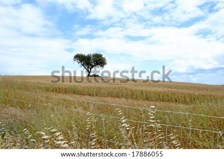 lonely tree in typical landscape from alentejo portugal - stock photo