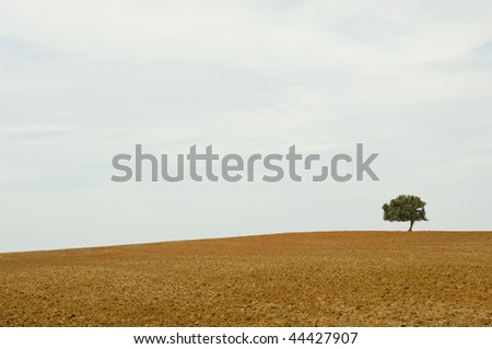 Lonely tree in wasteland - stock photo