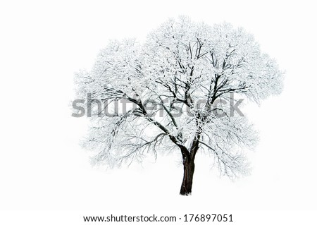 Lonely tree in winter isolated on white background. - stock photo
