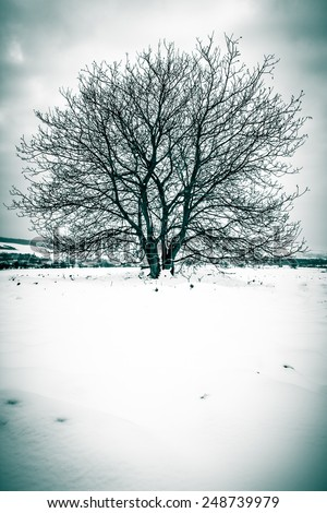 lonely tree in winter landscape - stock photo